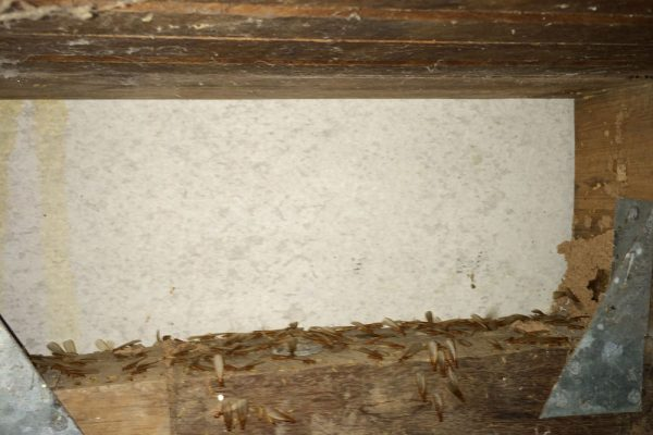 Greenhalgh-Other-Termite-Control-Products-2