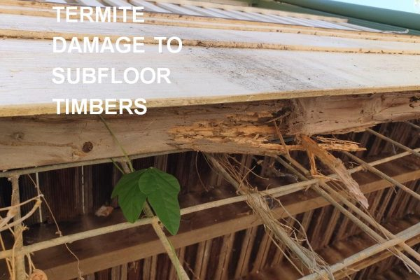 Greenhalgh Pest Control Termite Damage to Subfloor timbers 1