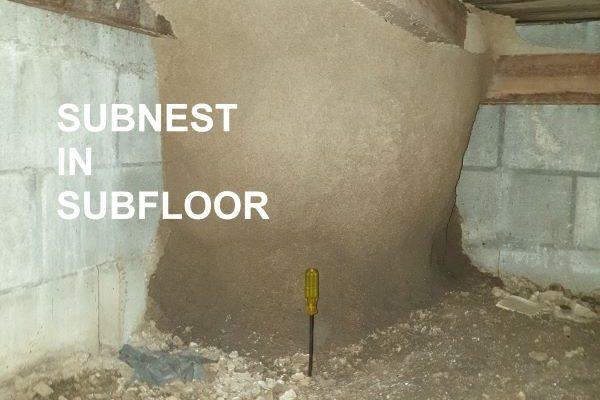 Greenhalgh Pest Control Termite Damage Subnest Subfloor