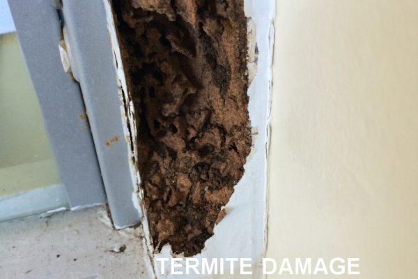 Greenhalgh Pest Termite Damage to Door Frame