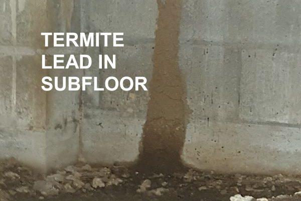 Greenhalgh Pest Termite Lead in Subfloor
