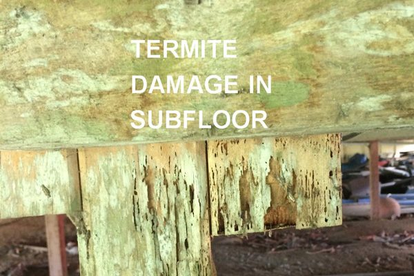 Greenhalgh-Termite-Inspections-Cairns